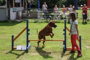 Ferienspiele 2014 in Biedenkopf / Sport mit Hunden
