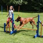 Ferienspiele – Mobile Hundeschule Hinterland; Foto: Sascha Valentin